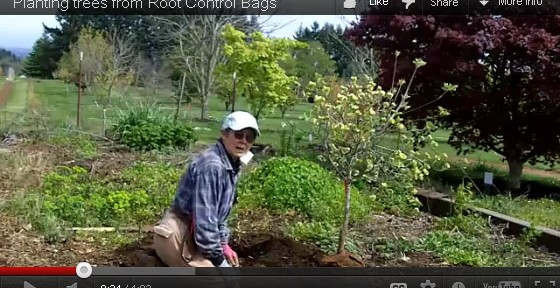 video-th-planting-trees-from-root-control-bags